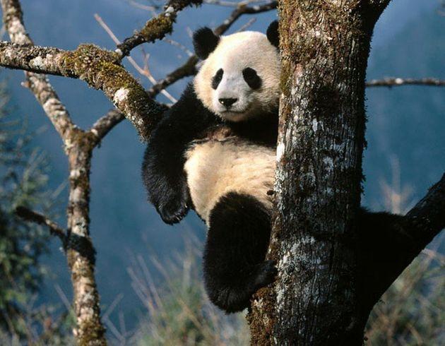 Google Panda : pourquoi avoir mis en place un tel filtre ? Pourquoi ce filtre Panda fait-il peur ? Que faire pour éviter le déclassement ?