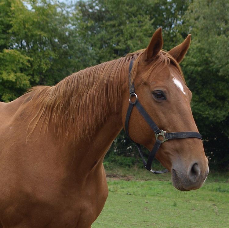 2627d1247044926-fotos-unserer-pferde-september-08-031