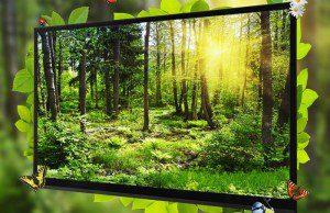 equipement-foyers-francais-televiseurs-haute-definition