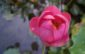 Serge-Henri et le lotus : 10 jours d'aventures en Chine, récit de voyage touristique, en images et en texte