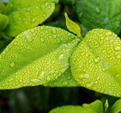 Produits bio achetés en grandes surfaces ; proposition de trois insights de consommateurs pour la consommation de bio en GSA : le jeune papa investi, la jeune grand-mère, l'étudiante « healthy »