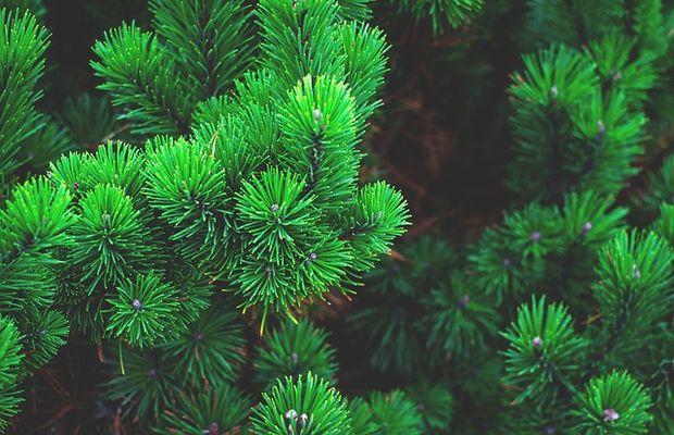 Produits bio achetés en grandes surfaces ; proposition de trois insights de consommateurs pour la consommation de bio en GSA