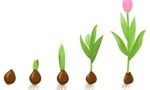 Le modèle de Greiner : de son utilité en management, à son application en planning stratégique
